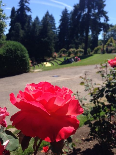 Enjoy the roses, views and relaxing places to sit and take it all in.